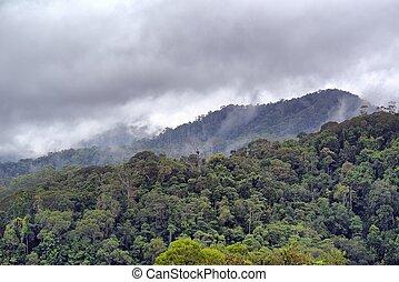 steamy, foresta pluviale