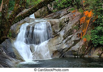 Steamy Rainforest - steamy rainforest at the Josephine Falls...