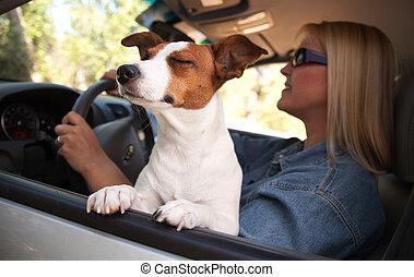steckfassung russell terrier, genießen, a, auto, reiten