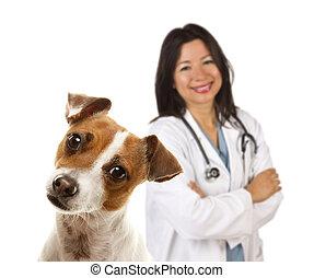steckfassung russell terrier, und, weibliche , tierärztliche...