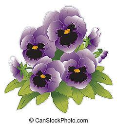 stedmoderblomst, blomster, lavendel