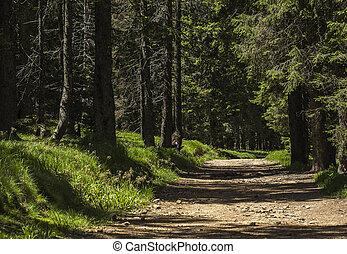 steegjes, in, een, bos