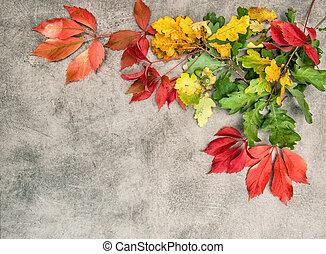 steen, bladeren, eik, herfst, achtergrond, esdoorn