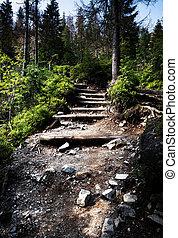 steen, bos, tree, walkway