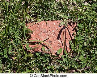 steen, gras, groene achtergrond