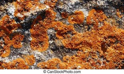 steen, texturee