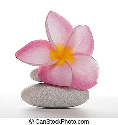 steentjes, frangipani, witte bloem