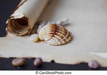 steentjes, oud, zee, tekst, boekrol, thema, plek, seashells, nautisch, perkament