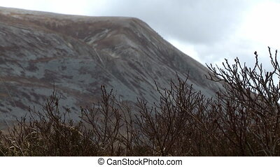 Low angle view of an icy, bald mountain rearing up behind a row of spiky, leafless bushes