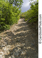 Steep descent on a dirt road in a mountain forest.