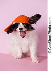 Steep doggie in a cap