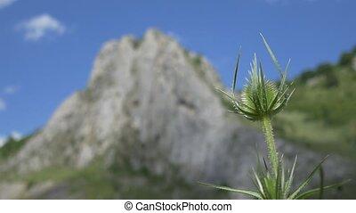 Steep High Cliff