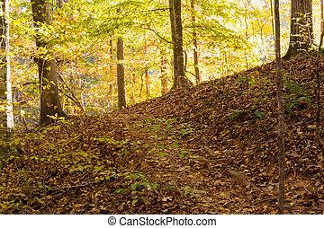 Steep Hiking Trail in Fall
