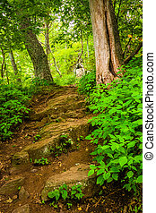 Steep hill on a trail in Shenandoah National Park, Virginia....