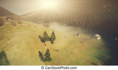 Steep mountain wildlife forest slope aerial view. Fir Tree...