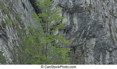 Steep Rocks and Trees
