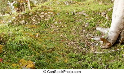 Steep terrain and flora on Machu Picchu - Pan shot, from...