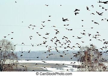 steepe, vogels