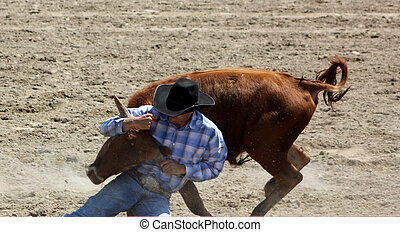 A cowboy (bull dogger) wrestles a steer at a rodeo event