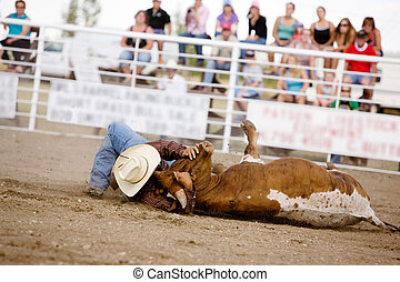 Steer Wrestling - Steer wrestling at a local small town...