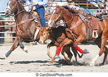 Steer wrestling competition in rodeo.