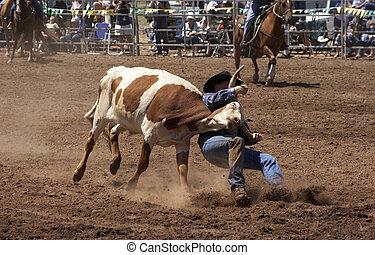 Steer Wrestling - Cowboy wrestling a steer down