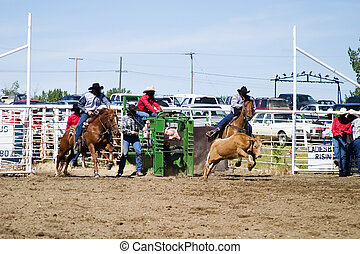 Steer Wrestling at a small town rodeo