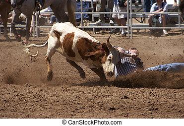 Steer Wrestling - hanging onto a steer