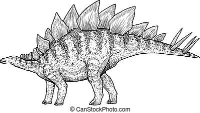 Stegosaurus illustration, drawing, engraving, ink, line art, vector