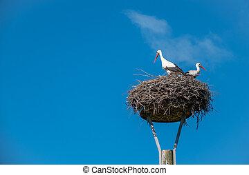 stehende , blauer himmel, paar, wenn, wetter, störche, nest, nett