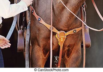 stehende , pferd, pferdesattel, detail, zaum, westlich