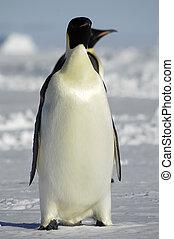 stehende , pinguine