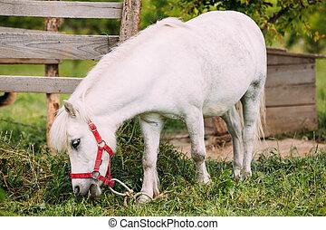 stehende , ranch., essende, gaul, landschaft, pony, weißes, gras