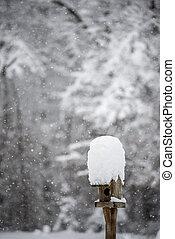 stehende , wintermütze, schnee, zubringerlinie, vogel, kleingarten