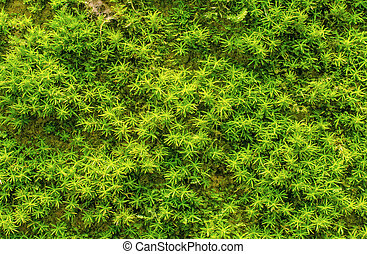 stein, grün, überwachsen, moos, wald