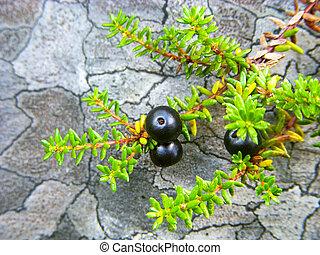 stein, hintergrund, crowberry, schwarz
