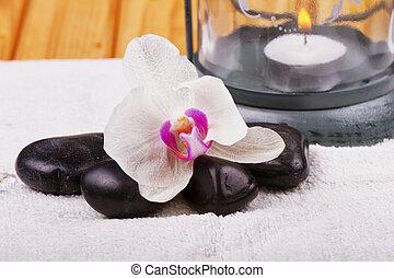 steine, orchidee