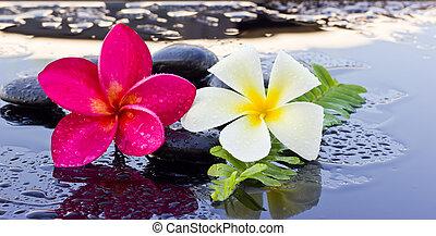 steine, spa, flower., frangipani