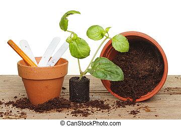 stekker, plant