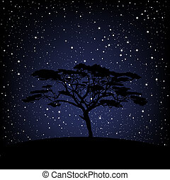 stellato, sopra, albero, notte