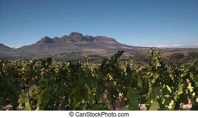 Stellenbosch Vineyards - View over Stellenbosch vineyards...
