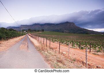 Stellenbosch wine lands region near Cape Town.