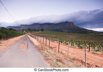 Stellenbosch wine lands region near Cape Town.