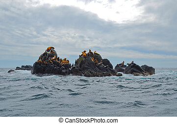 Steller sea lions on the rocks of Moneron island