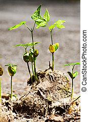 stem grow on elephant dung