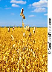 Stem oats in the sky
