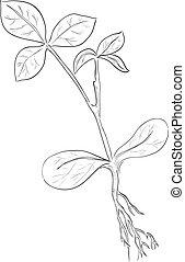 Stem of a plant