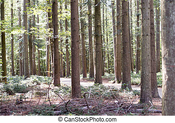 stem of fir tree with rocks in forest