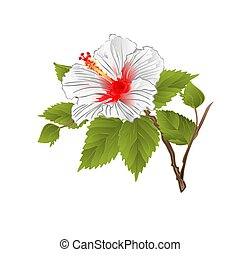 Stem white hibiscus tropical flower vector.eps