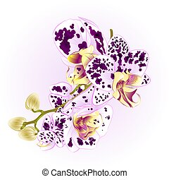 Stem with flowers and  buds beautiful  Orchid Phalaenopsis spotted vector.eps